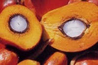Palm oil body seeks to allay new Chinese regulatory fears