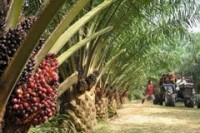 Thailand ready to send first sustainable palm oil shipment to Europe
