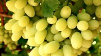 Thompson seedless grapes from Australia. © iStock