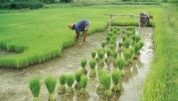 China must focus on modernising its agriculture, IFPRI has warned