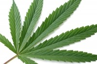 Oz, NZ get first-step approval for hemp in food