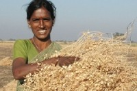 India-led team decodes genome sequence of the chickpea