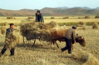 Malnutrition still rife in N Korea in spite of increased crop yield