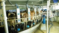 Fonterra raises 'dim sum' funds for China expansion