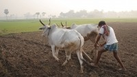 Indian agriculture must modernise if it stands to keep up with population growth