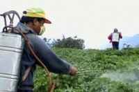 Beware of pesticides in Chinese imports: study