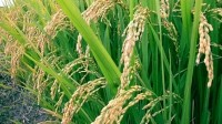 Indian agrifood demand to rise by 136% by 2050