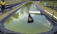 A pilot algae farm at the University of Queensland shows how microalgae derived cattle feed can be produced at low cost