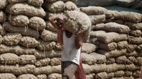 Up to one-third of Indian grain being lost to substandard warehousing