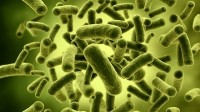 Stars aligning for India's growth-driven probiotics market