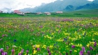 Grasslands in China's Qinghai Province