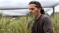 Jason Able with durum wheat in a plant-breeding trial