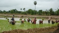 A typical scene in the Cambodian countryside
