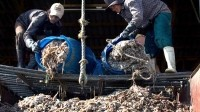 It is too early to praise industry for Thai prawn slavery meeting