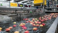Australian fruit exporter takes bigger slice of apple pie