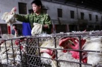 Shanghai's new live poultry regulations aim to prevent H7N9 outbreaks