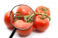 Tomato juice may slash waist size & inflammatory markers for young women