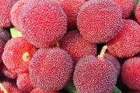 Big plans for Chinese berry in Australia