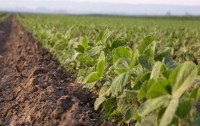 Responsible soy sourcing: China could be about to enter the fray, says ProTerra