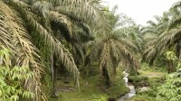 Palm oil in troubled waters with new Sumatra death accusation