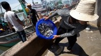 How companies should act to stamp out fishing slavery in Thailand