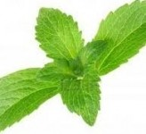 New Chinese stevia source enters North American market