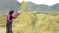 Tibet is the world's biggest barley producer